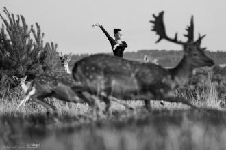 Wild Asses: Swift Animals