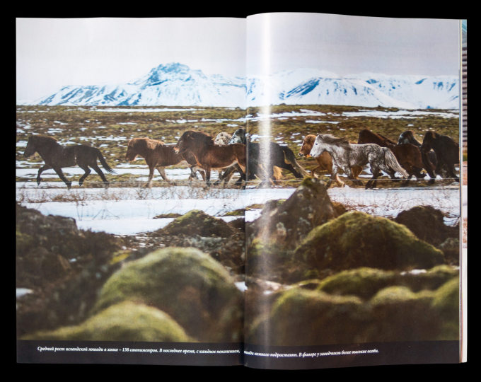 NG-Russia-Iceland-Horse-2015-14